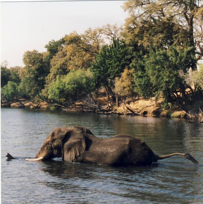 olifant1